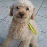 cachorro2