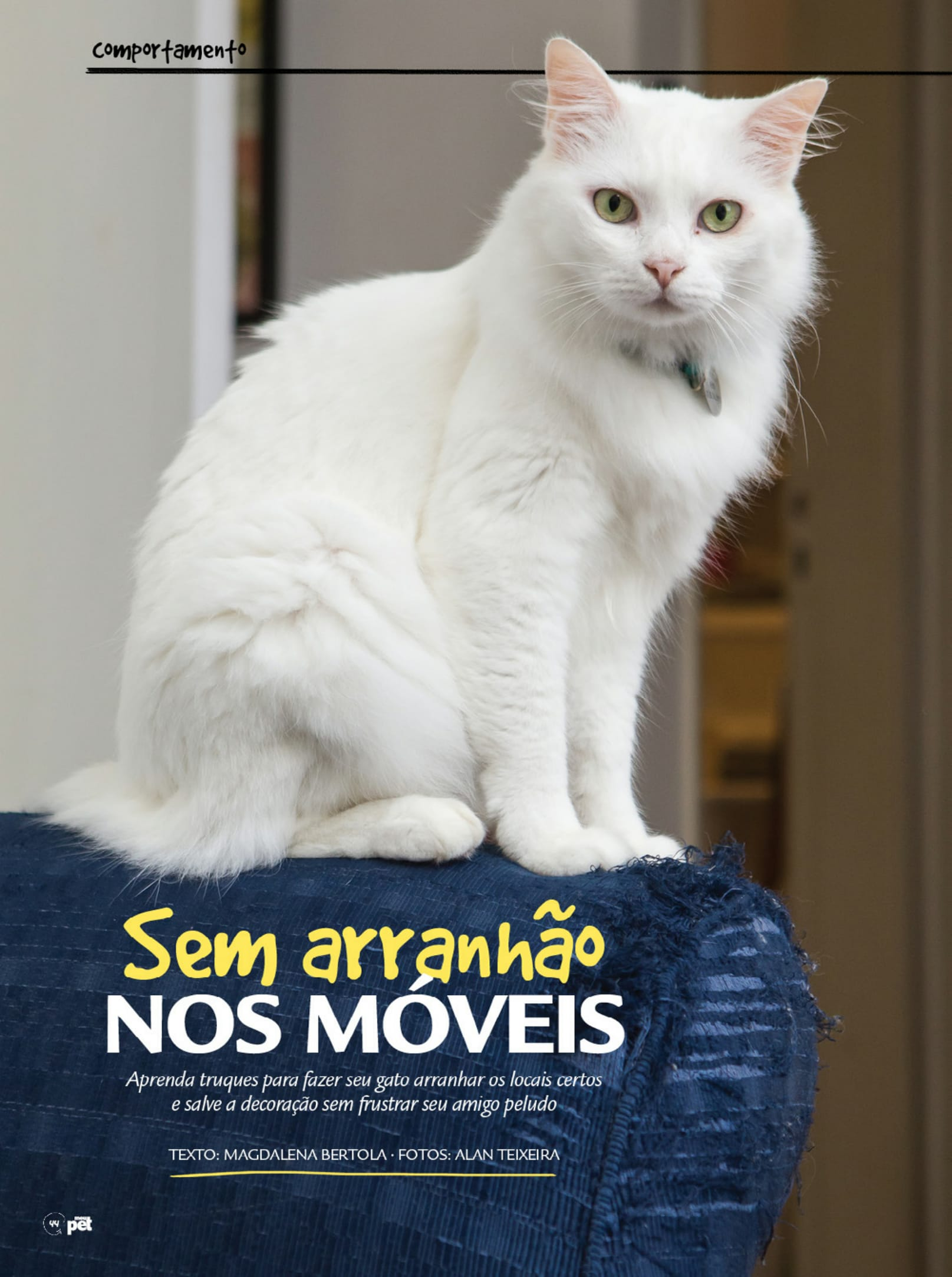 pauta_arranhadura-de-gatos_revista-meu-pet-1