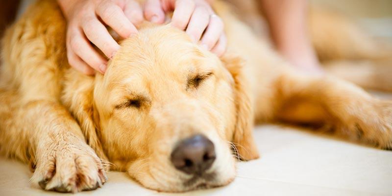 dicas_interna-massagem-pet