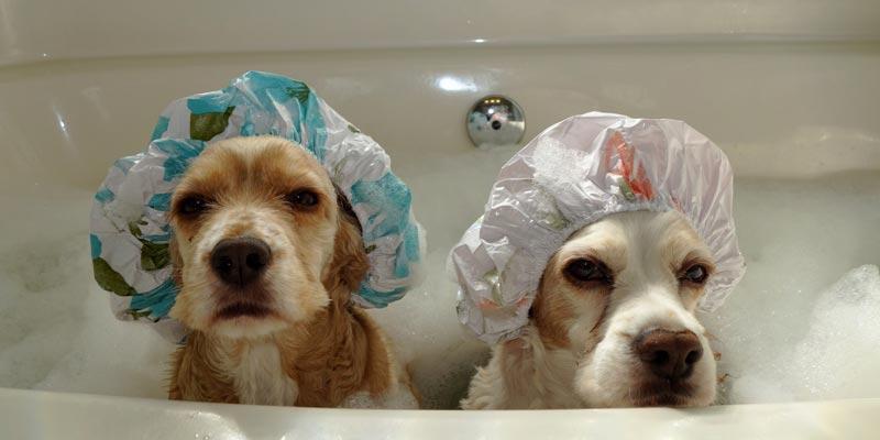 dicas_interna-cachorro-banho