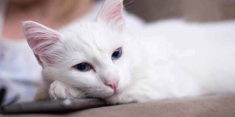 dicas_interna-gato