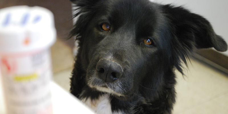 dicas-interna-cachorro-remedio