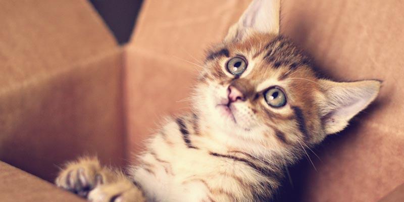 dicas_interna-tudo-sobre-gatos