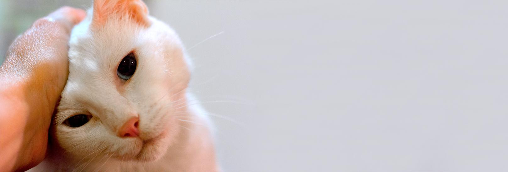 slider-gato