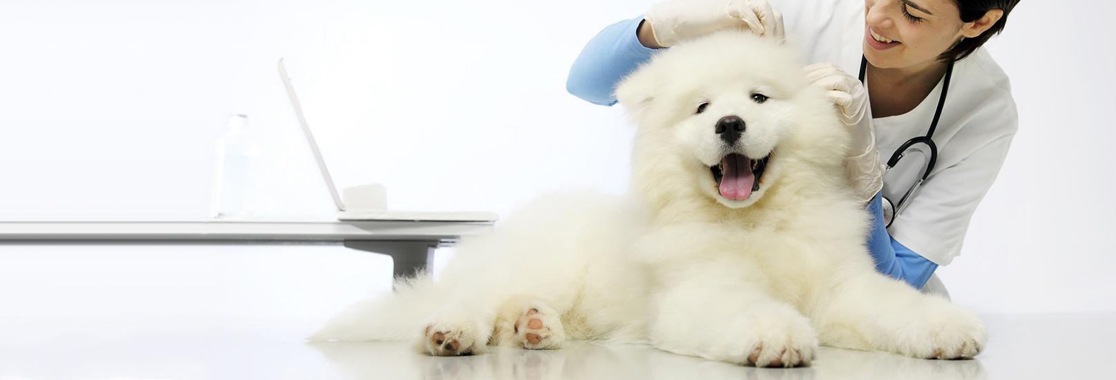 Curso-veterinarios